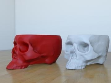 skull plantpot